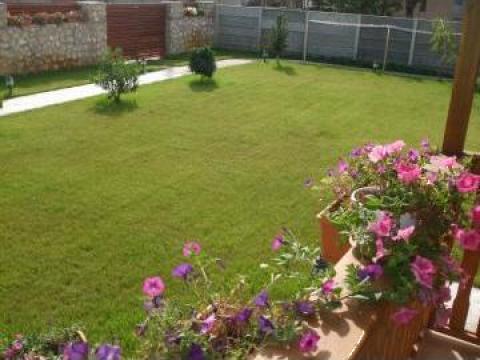 Gazon rulou pentru peluze insorite de la Garden Rustic Spatii Verzi