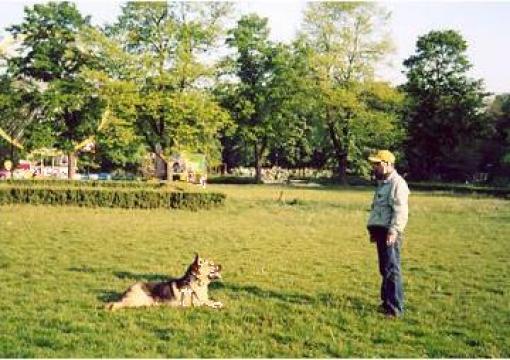 Servicii dresaj canin, servicii veterinare