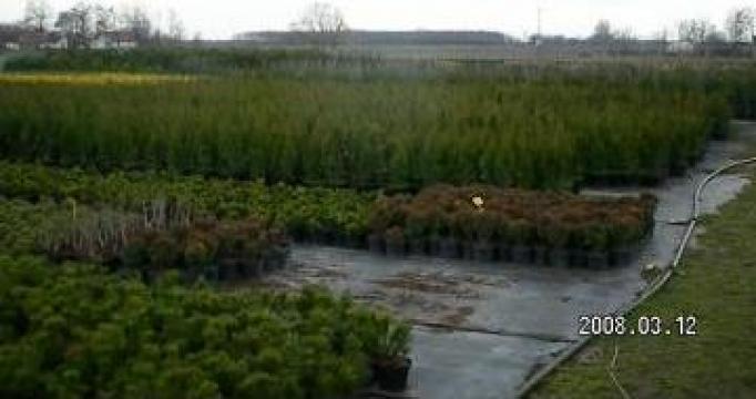 Plante interior / exterior