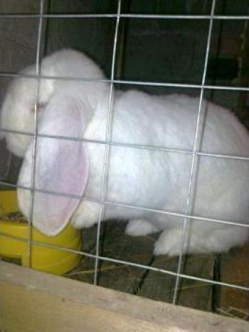 Ferma de iepuri
