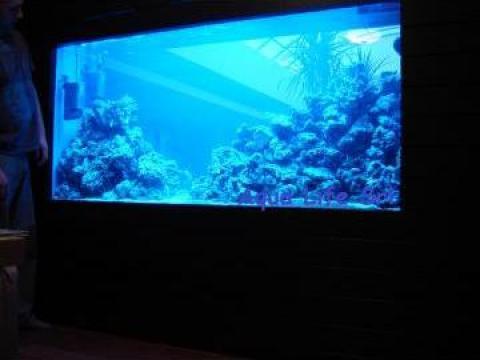 Acvarii marine la comanda de la Aqua Life Srl