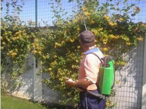 Intretineri pomi fructiferi, livezi pe rod si in formare
