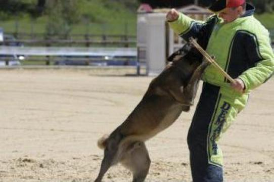 Servicii Scoala de dresaj canin Atomic Dogs Rm. Valcea