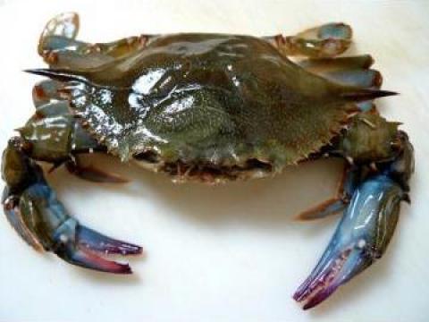 Crab Softshell de la Expert Factor Foods Srl