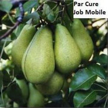 Puieti de par Kaiser de la Pomi Fructiferi, Arbusti, Vita De Vie