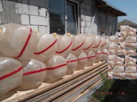 Butoaie din fibra de sticla de la Andrei Vasile Pfa.