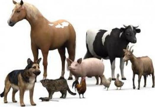 Hrana si accesorii animale de companie de la Savgi Srl