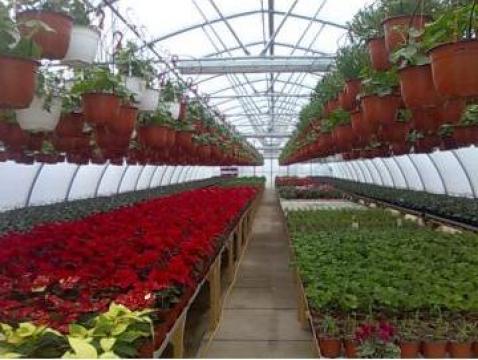 Flori la ghiveci pentru 1 Martie